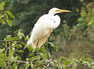 Mandagadde-Bird-Sanctuary