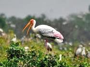 Vedanthangal-Bird-Sanctuary