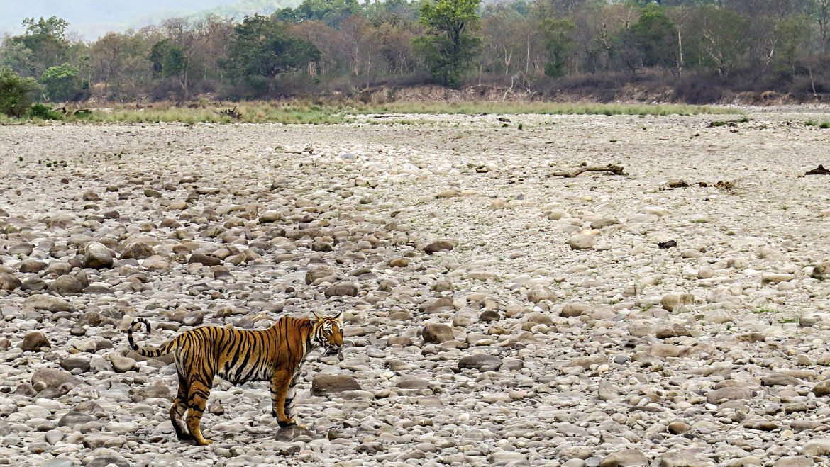 Cherish Moments in Corbett National Park Before it Gets Too Late