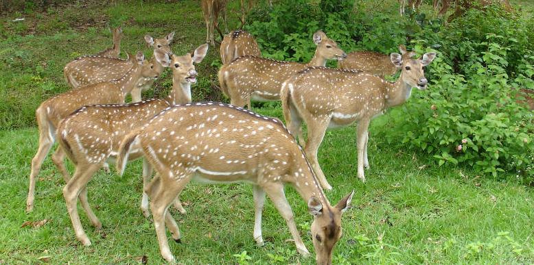 Aralam-Wildlife-Sanctuary