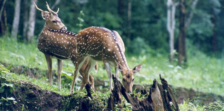 Chimmini-Wildlife-Sanctuary