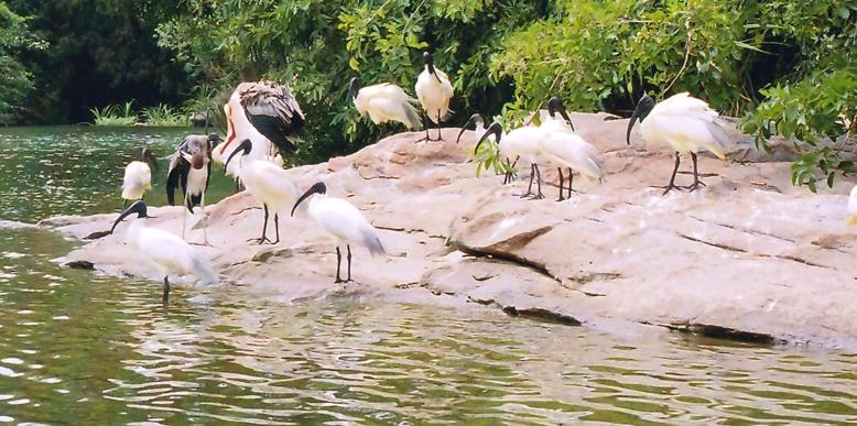 Mangalavanam-Bird-Sanctuary