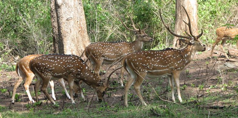Parambikulam-Wildlife-Sanct