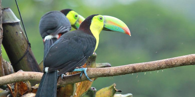Thattekkad-Bird-Sanctuary
