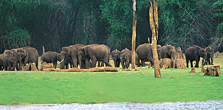 chinnar-wildlife-santuary