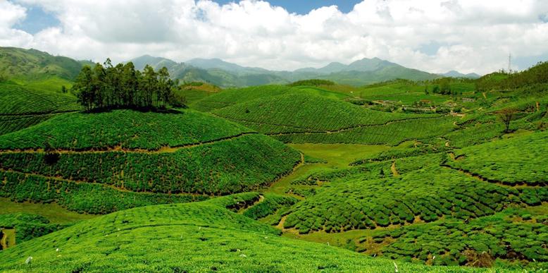 devikulam-hills