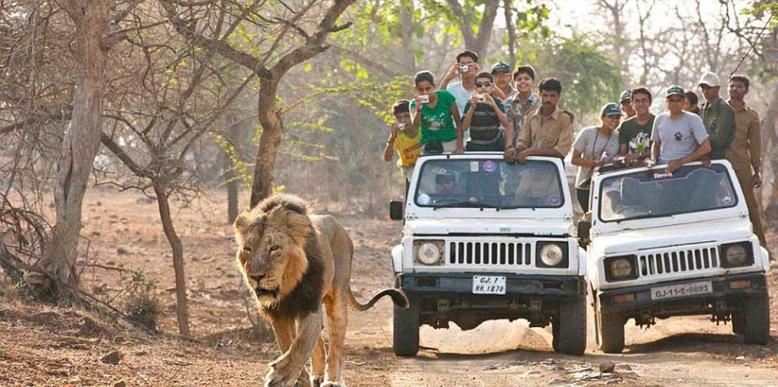 gir-jeep-safari