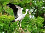 kuarakom-bird-sanctuary