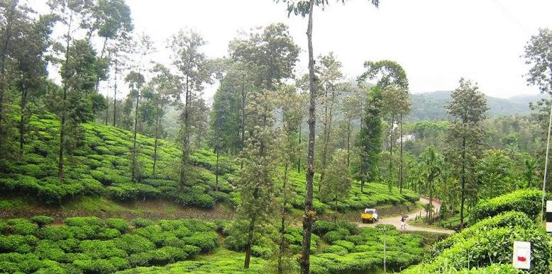 peermade-hills