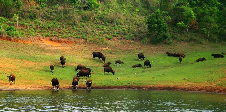 periyar-wildlife-santuary
