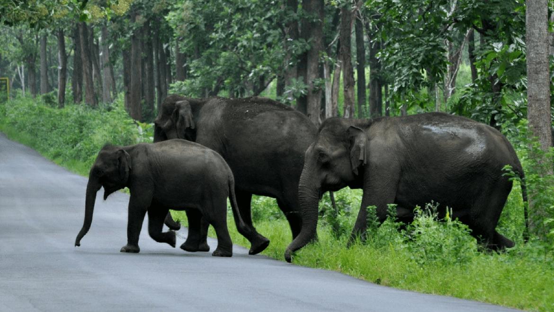 Top 16 Wildlife Sanctuaries and National Parks in Kerala