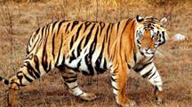 Kanha Wildlife Tour from Nagpur