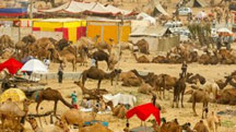 Golden Triangle with Pushkar Festival