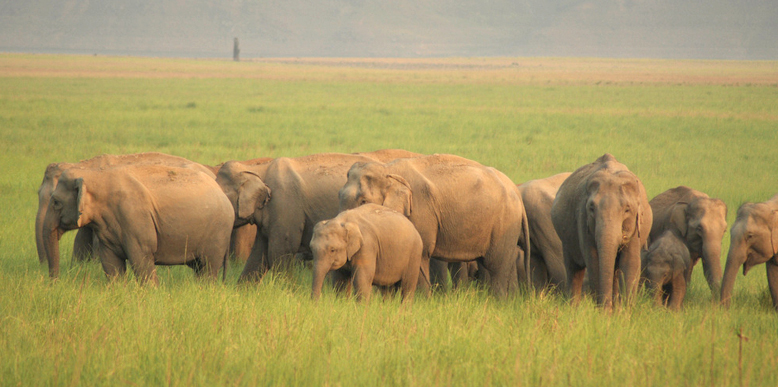 elephant-group-corbett