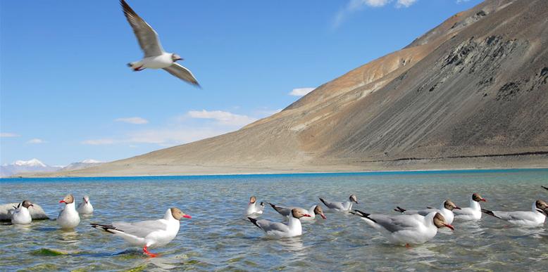 birding-in-ladakh
