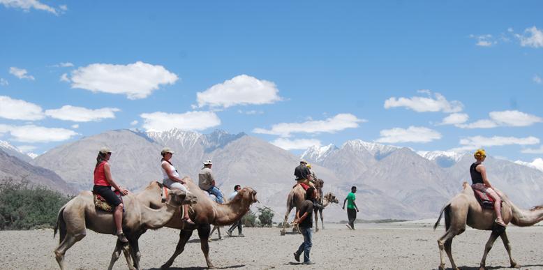 ladakh-camel-safari