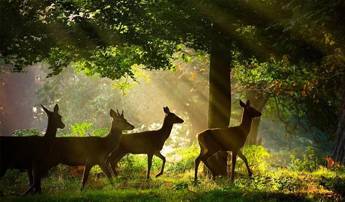 Chikhaldhara-Wildlife