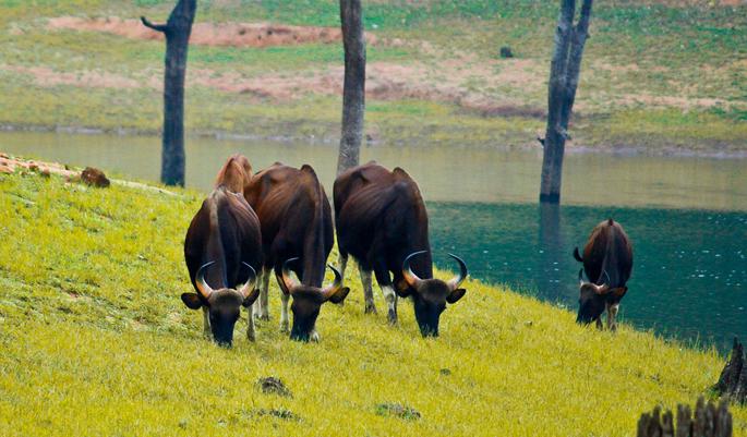 Dajipur-Bison-Sanctuary