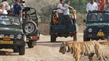 Delhi Ranthambore Weekend Tour