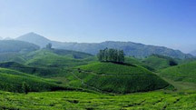 Hill Station Tour of South India