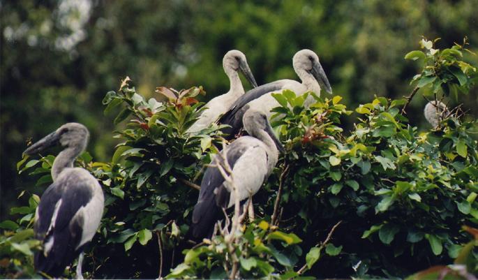 Karnala-Bird-Sanctuary