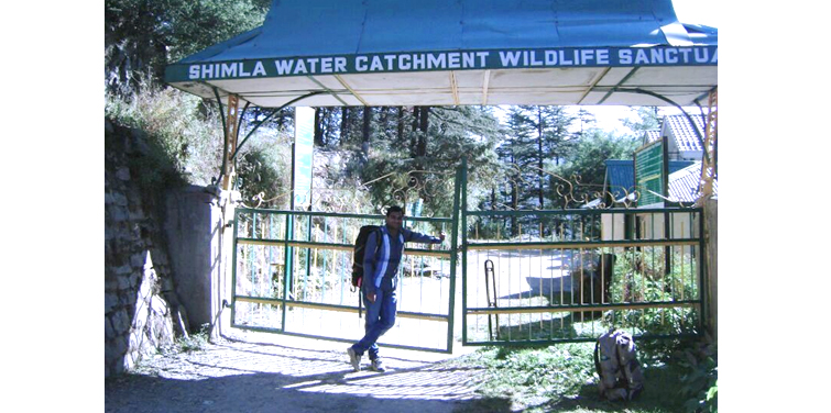 Shimla Water Catchment Wildlife Sanctuary, Shimla