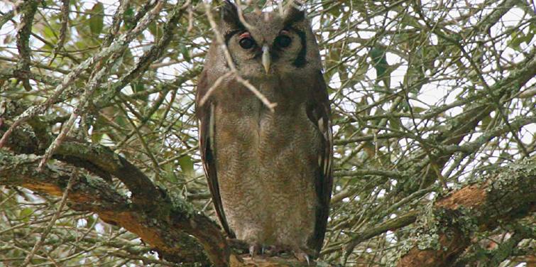 birding-at-corbett