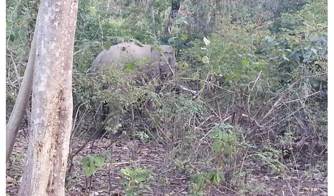 Elephant at Corbett National Park
