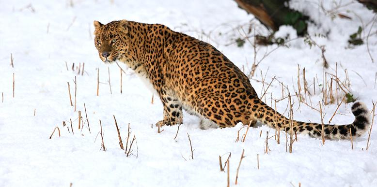 kashmir-wildlife