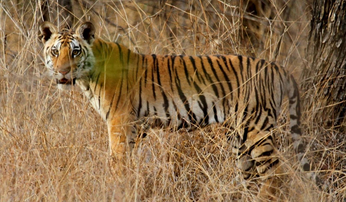 pench-national-park