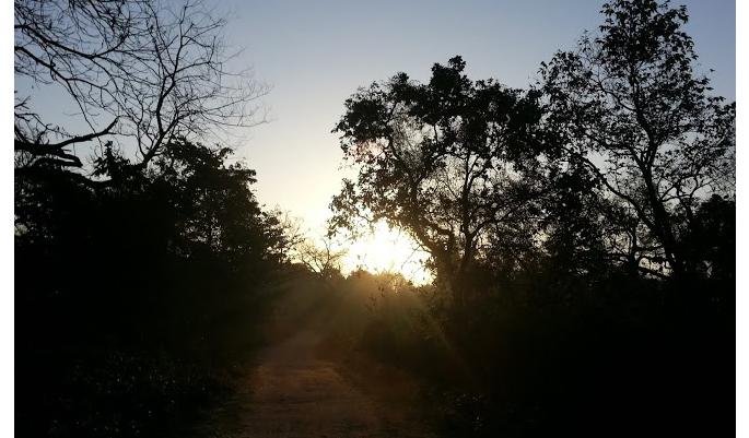 Sunset view at Corbett