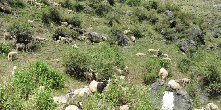 Great-Himalayan-National-Park