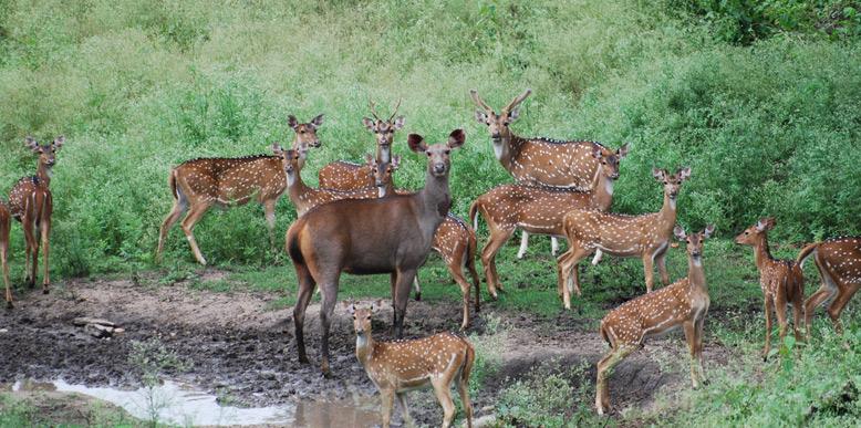 Indravati-National-Park
