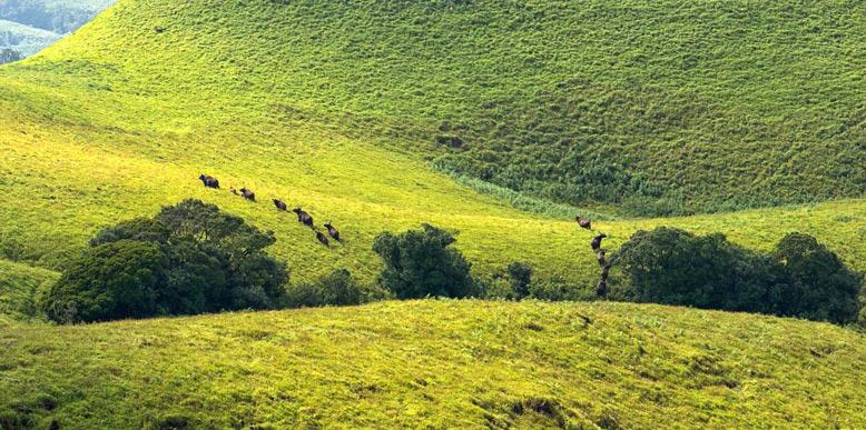 Kudremukh-National-Park
