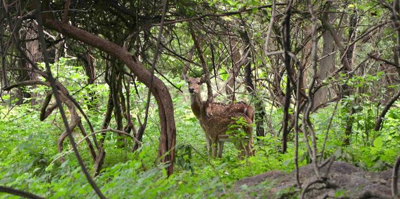 balapakram-national-park
