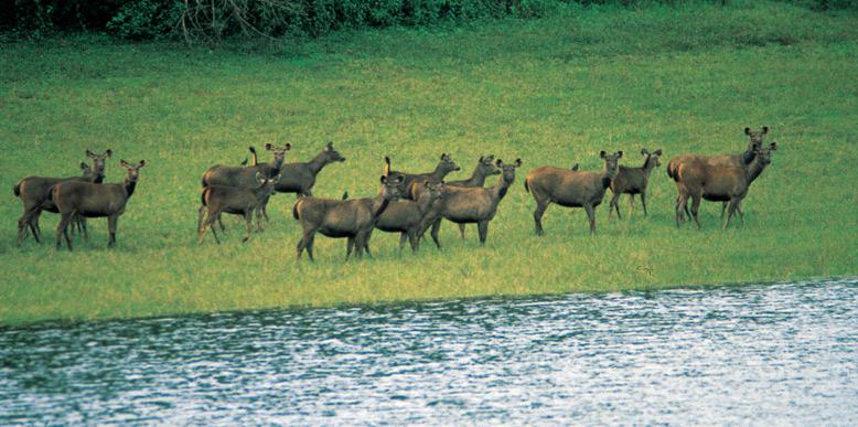 chnnar-wildlife-sanctuary