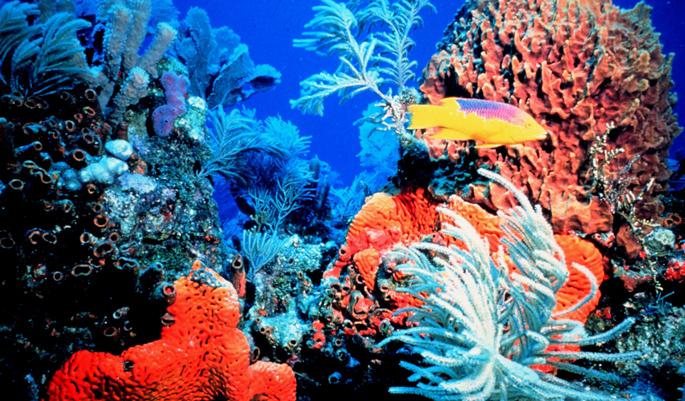 coral-lakshadweep