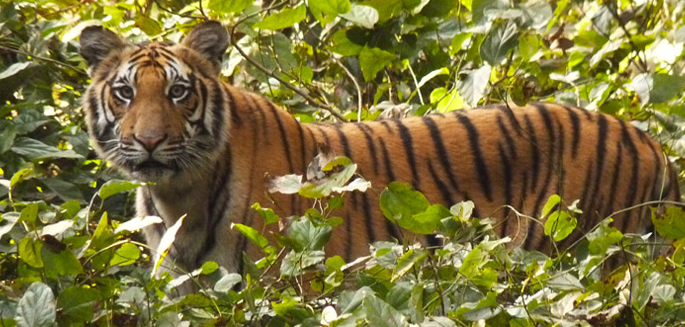 dudhwa-tiger-reserve
