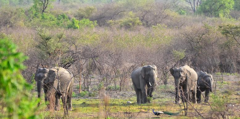 Elephant Safari at Corbett