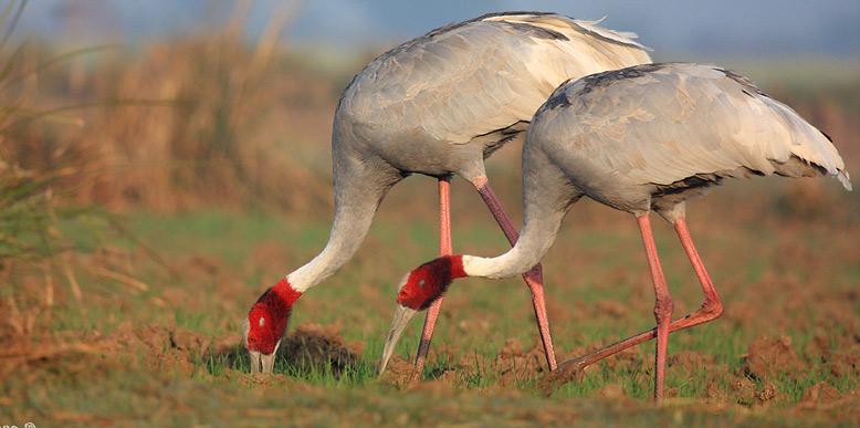 ghana-national-park