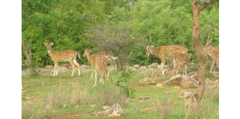 madhav-national-park
