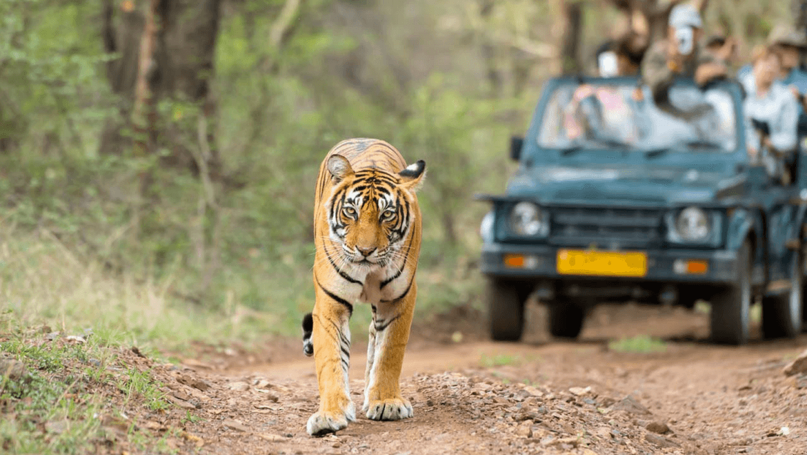 Top 50 National Parks and Wildlife Sanctuaries in India