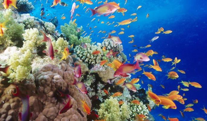The chromatic world of aqua fauna