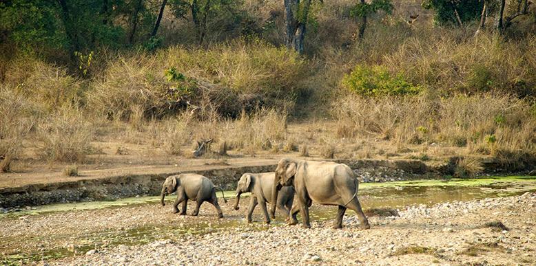 rajaji-national-park