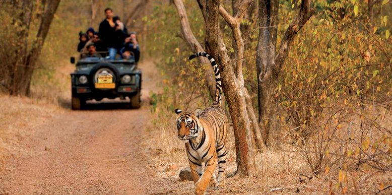 Ranthambore India  city images : Top 50 National Parks and Wildlife Sanctuaries in India