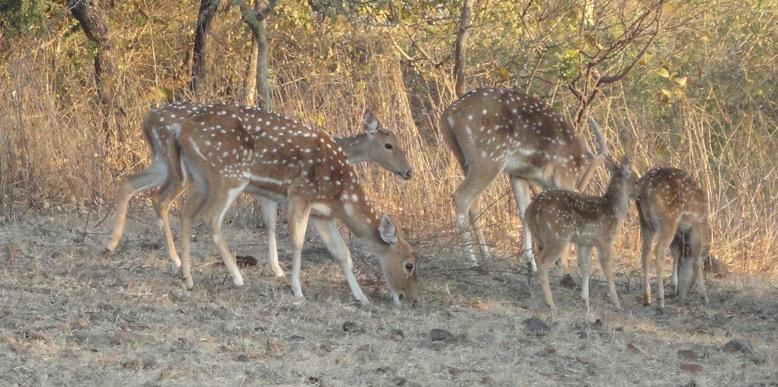 sariska-national-park