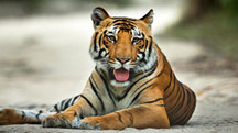 Chandigarh - Corbett Weekend Tour
