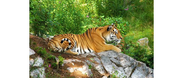 Renuka-Wildlife-Sanctuary1