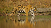 Wildlife Photography Tour to Central India