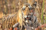 Best 13 Wildlife Holiday Packages for you in India